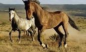 horses at spring basin 2