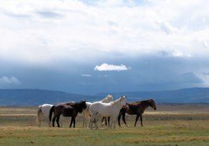 spring creek horses